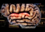 Мозг думает – как?