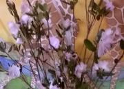 В чем целесообразность аллергии