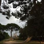 Сосны в Валенсии